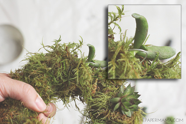 Close up of how to affix the floral hook on the succulent wreath.