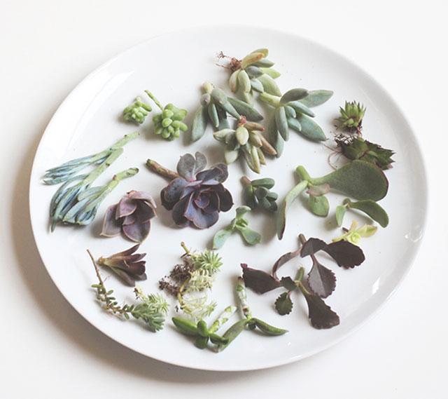 Trimmed succulents